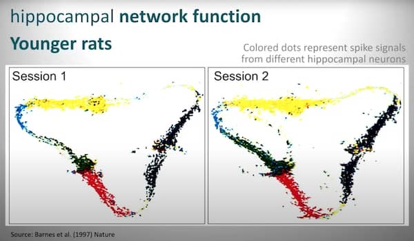 The young rat retrieves the same hippocampal map on both sessions.