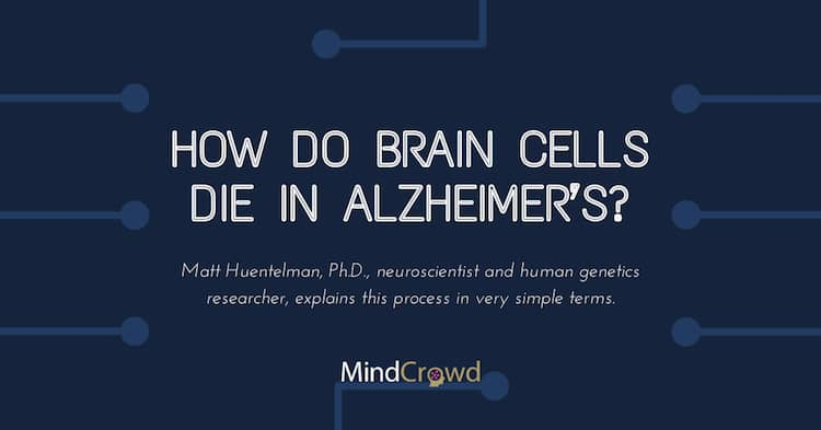 How do brain cells die in Alzheimer's? Click to find out.