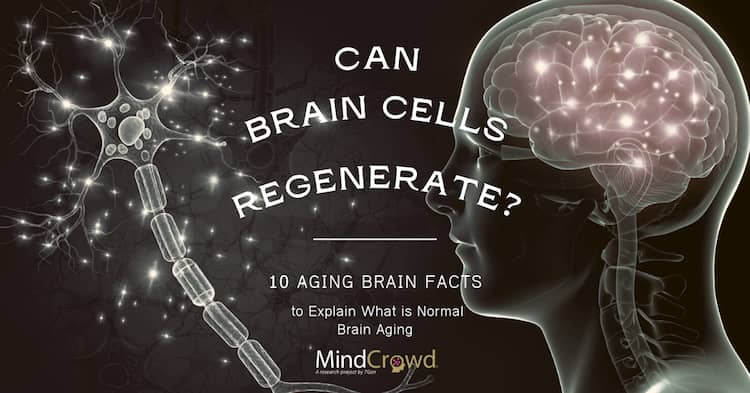 Can brain cells regenerate? Exercise and learning can increase neurogenesis, even in elders.